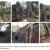 Obrázek 11. Ankgor v Kambodži: růst fíkusu přes budovu.